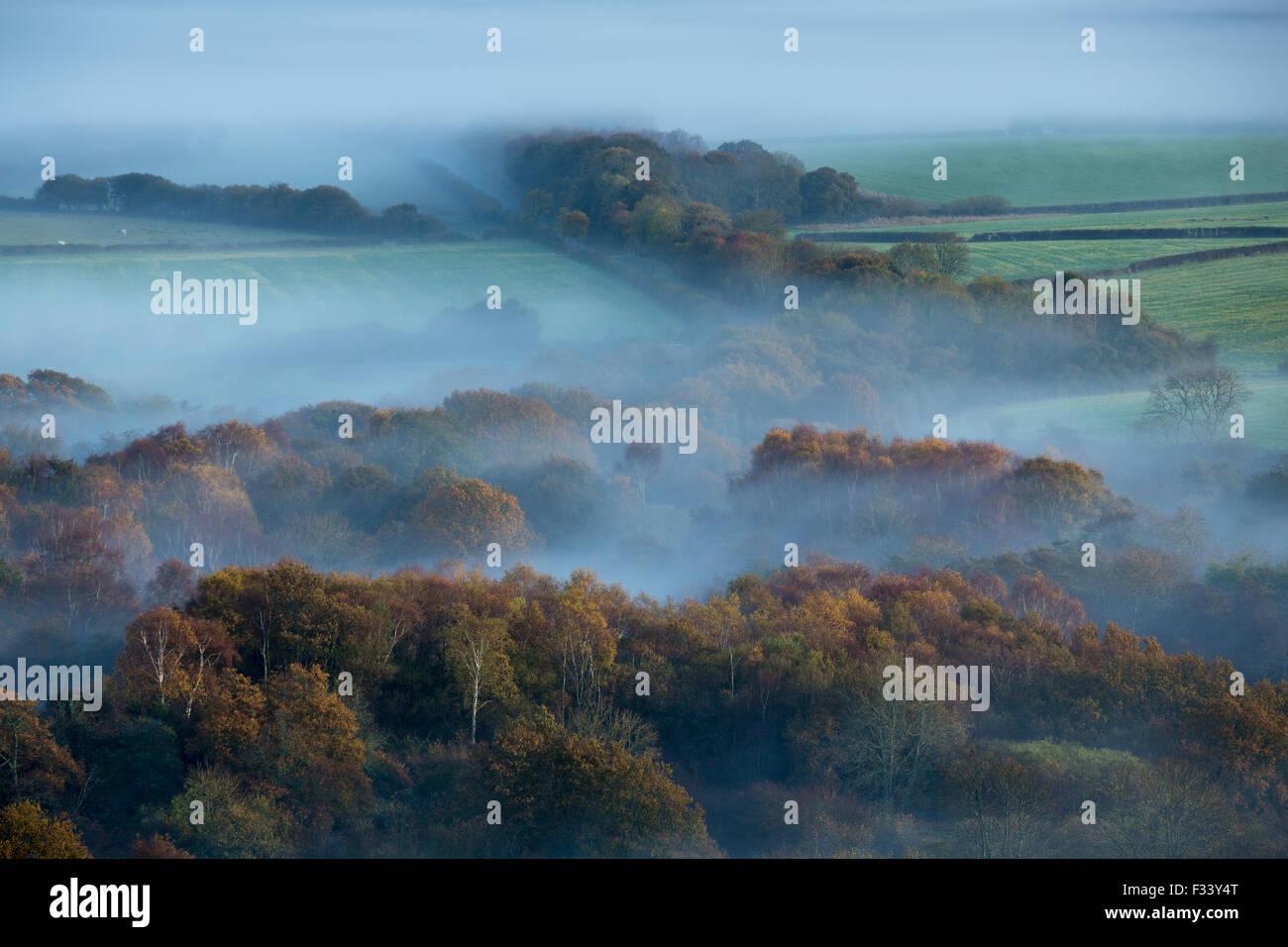 Una nebbiosa mattina sulla isola di Purbeck nr Corfe Castle, Dorset, Inghilterra Immagini Stock