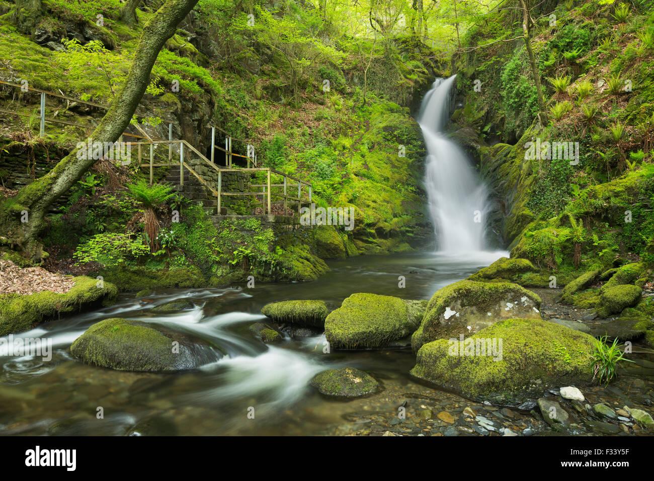 Dolgoch Falls, Gwynedd, Wales, Regno Unito Immagini Stock