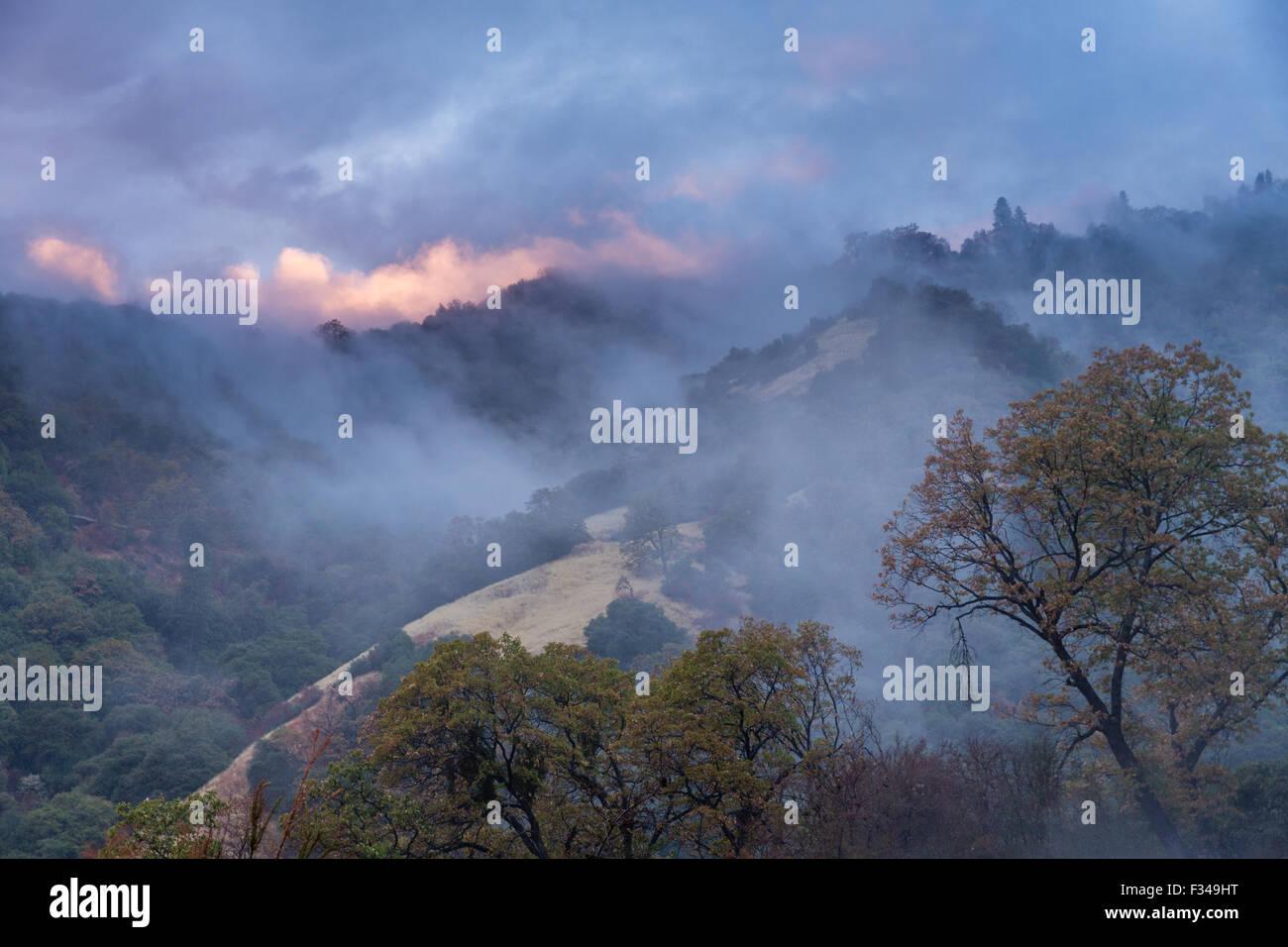 La nebbia dopo una doccia a pioggia nella valle Kaweah, Sequoia National Park, California, Stati Uniti d'America Immagini Stock