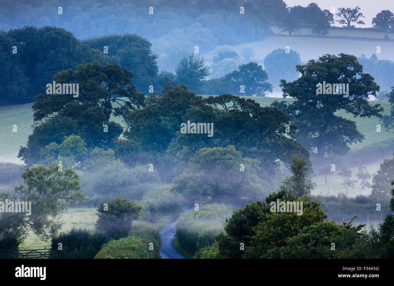 Una nebbiosa mattina vicino a Milborne stoppino, Somerset, Inghilterra, Regno Unito Immagini Stock