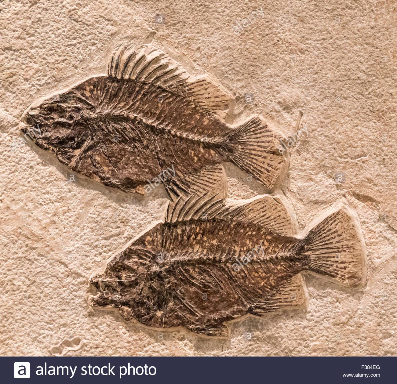 un sacco di pesce risalente Londra Ontario