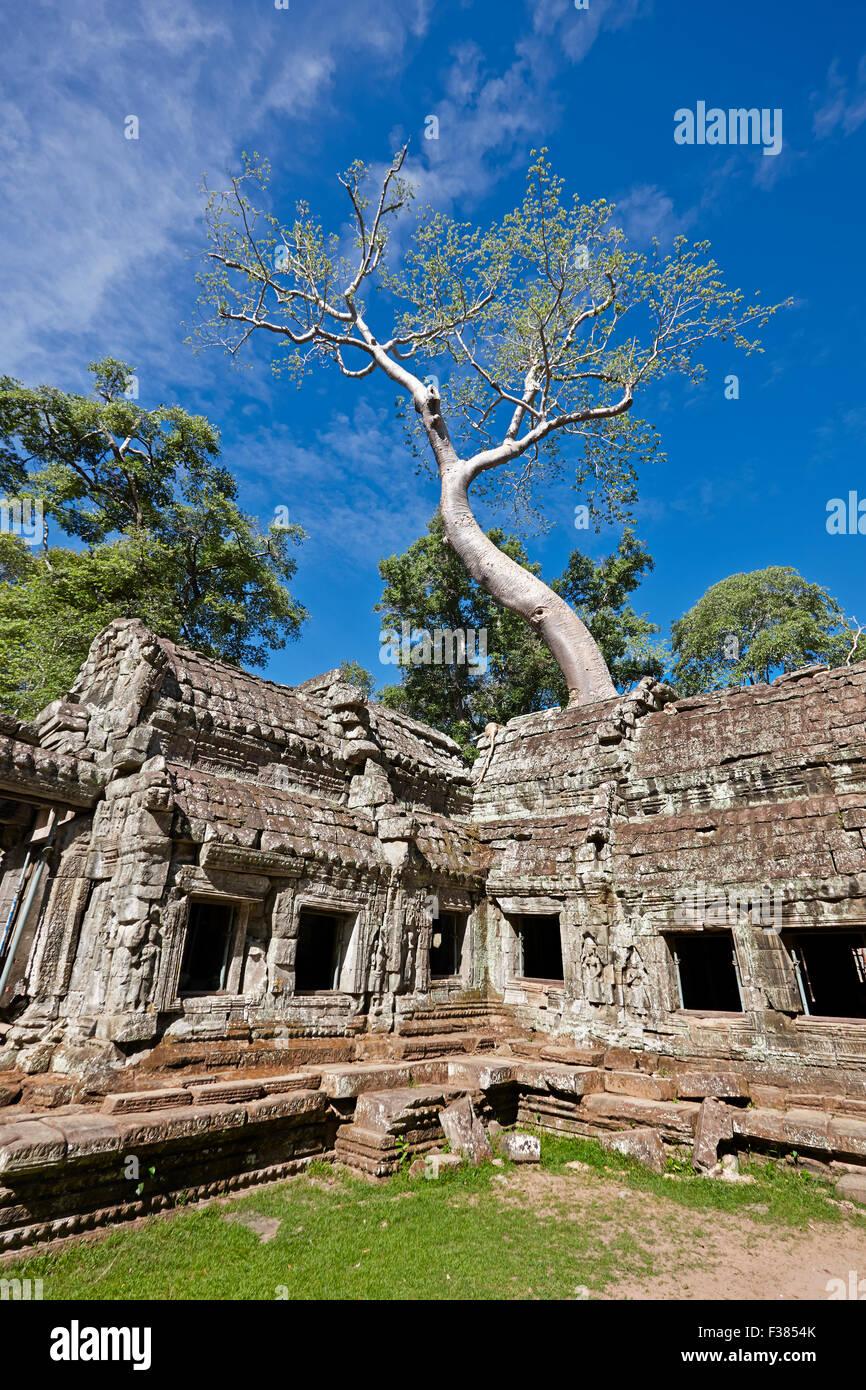 Ta Prohm tempio. Parco Archeologico di Angkor, Siem Reap Provincia, in Cambogia. Immagini Stock