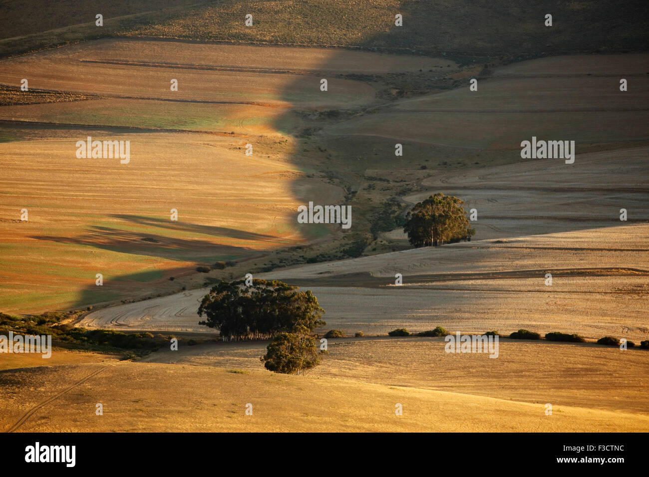 Terreni agricoli di laminazione nella regione di Overberg vicino Villiersdorp, Western cappuccio, Sud Africa Immagini Stock