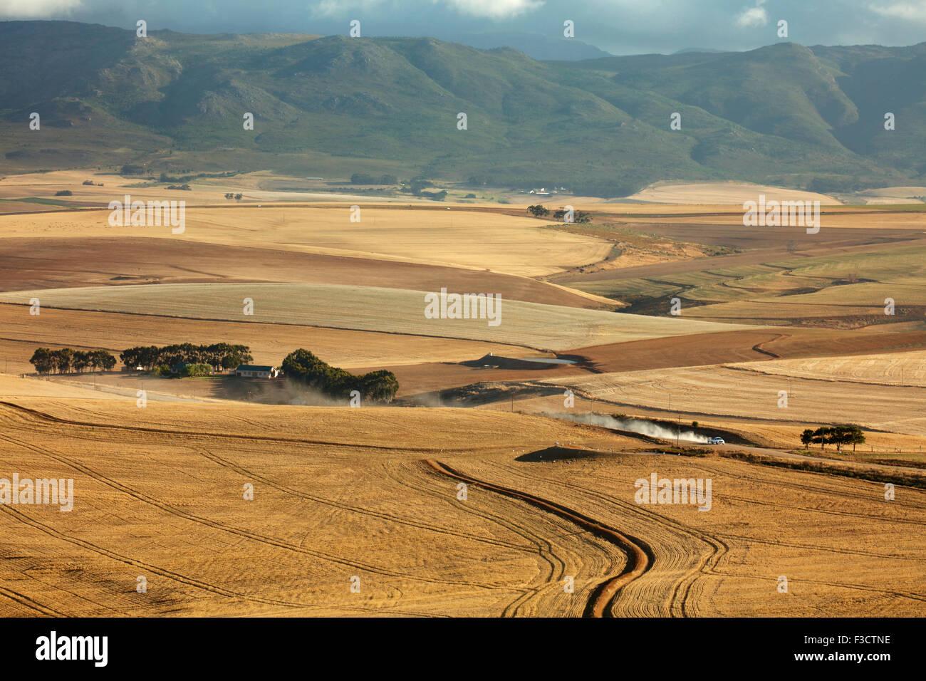 Terreni agricoli di laminazione nella regione di Overberg vicino Villiersdorp, Western Cape, Sud Africa Immagini Stock