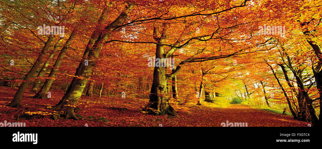 Germania: Colori d'autunno foresta in vista panorama Foto Stock