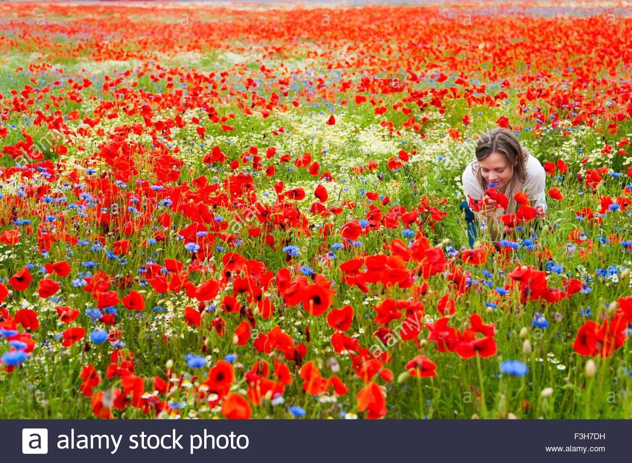Metà donna adulta in campo di papavero, piegatura a sentire il profumo dei fiori Immagini Stock