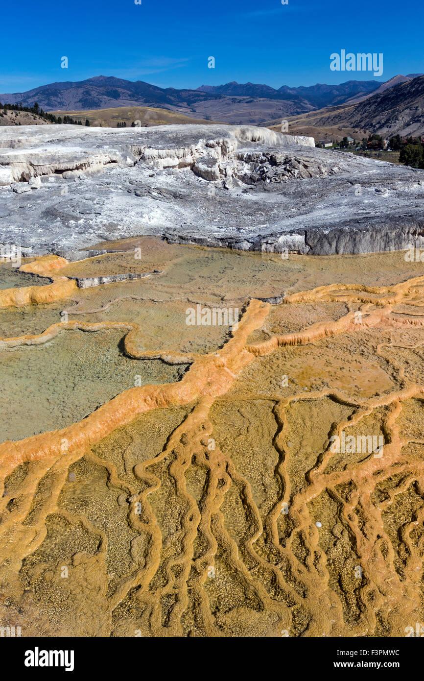 Mammoth Hot Springs; il Parco Nazionale di Yellowstone; Wyoming; USA Immagini Stock