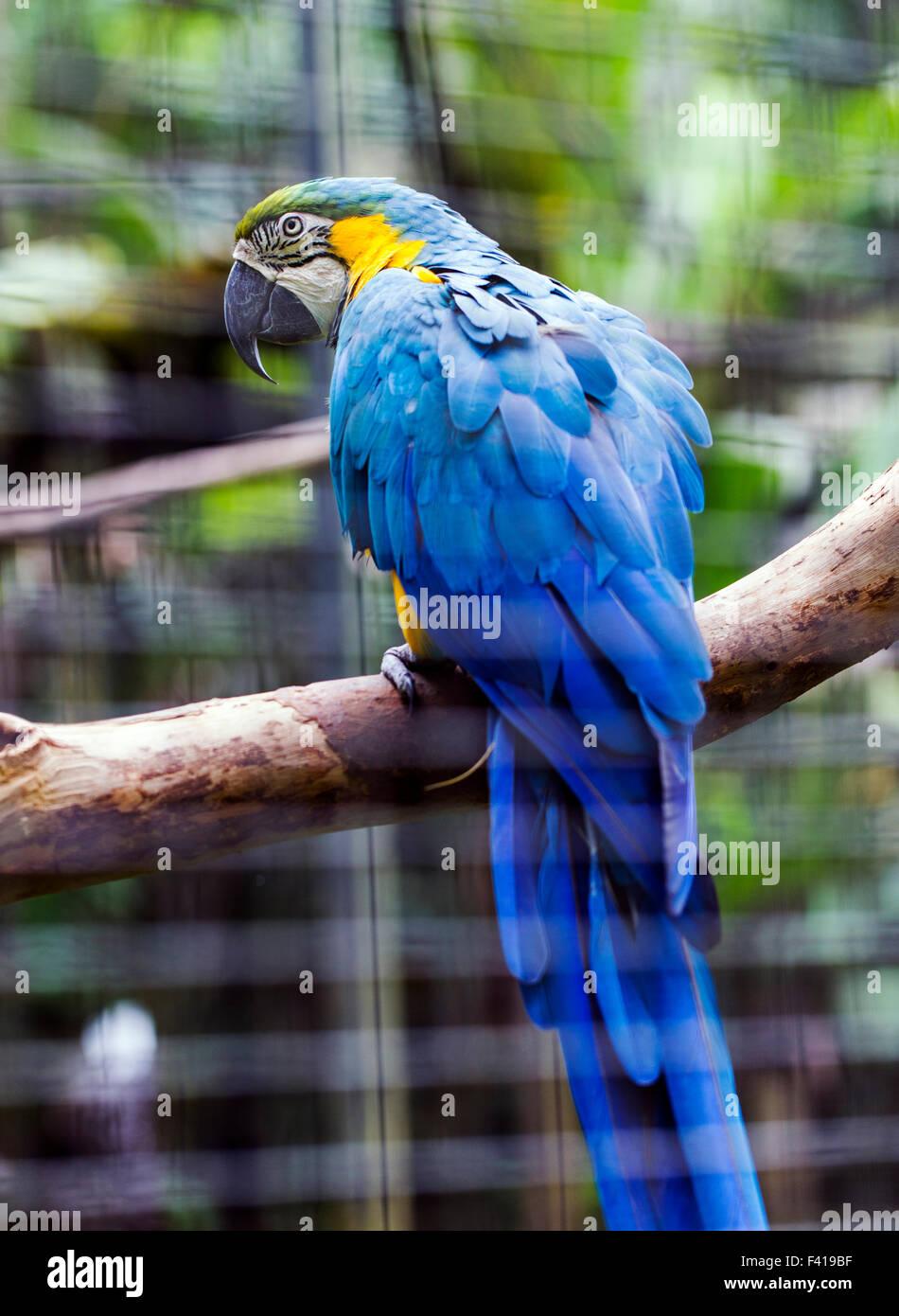 Pappagallo colorato, Hawai'i Tropicale Giardino Botanico Nature Preserve; grande isola, Hawaii, STATI UNITI Immagini Stock