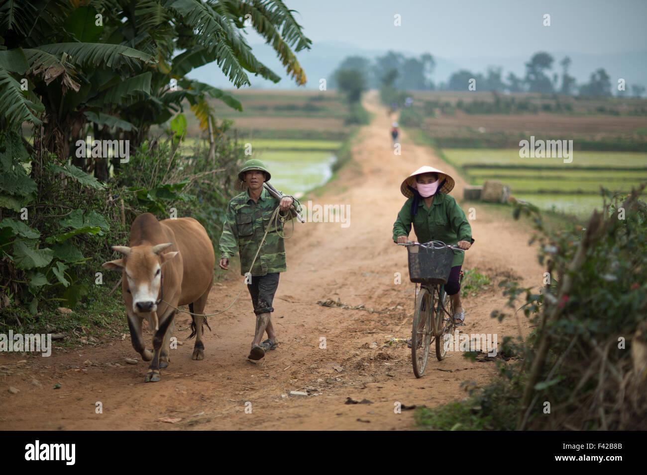 Un uomo e una donna con buffalo nr Phong Nha, Quảng Bình Provincia, Vietnam Immagini Stock
