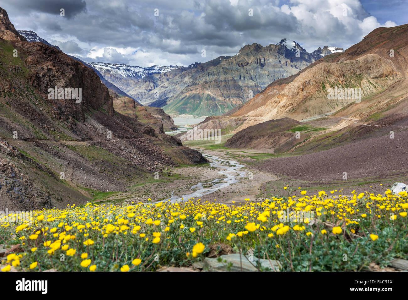 Valle dei fiori sul modo di Kaza in Himachal Pradesh Immagini Stock