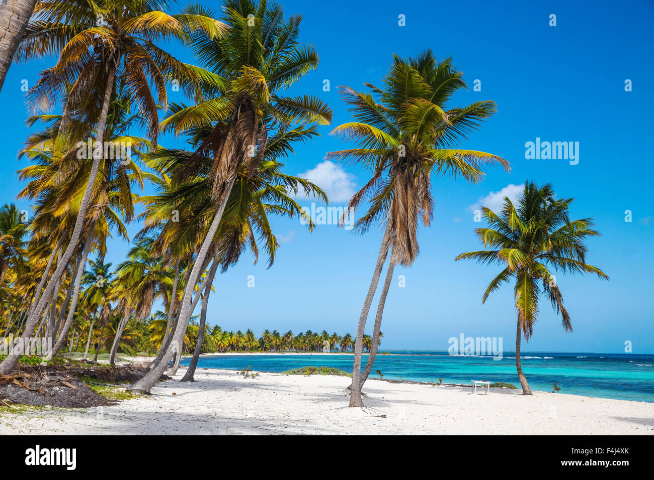 Canto de la Playa, Saona Island, Parque Nacional del Este, Punta Cana, Repubblica Dominicana, West Indies, dei Caraibi Immagini Stock