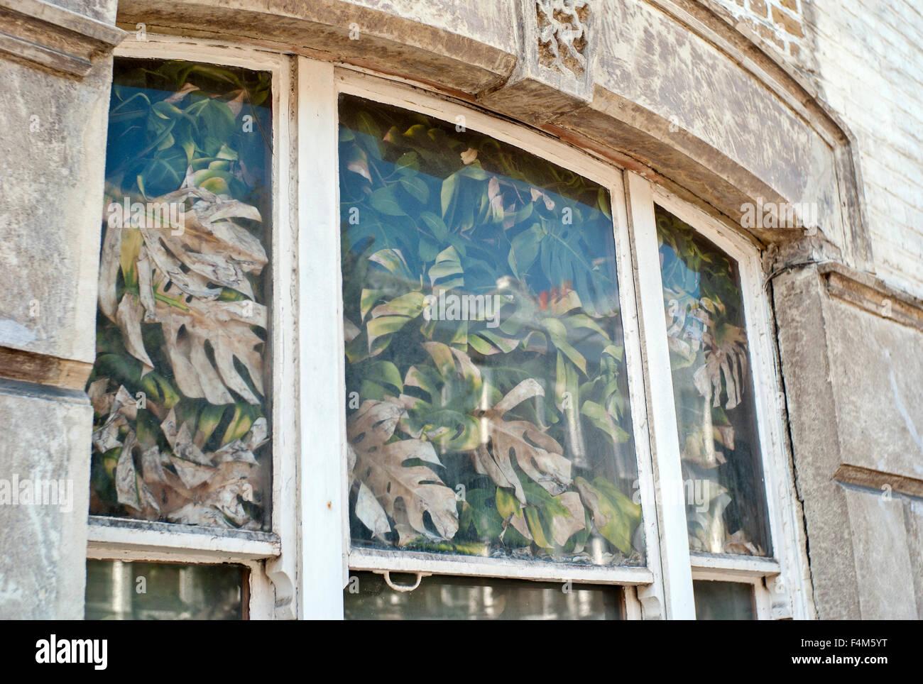 Casa Infestata da Erbacce piante di riempimento nella finestra della casa bloccando la luce Immagini Stock