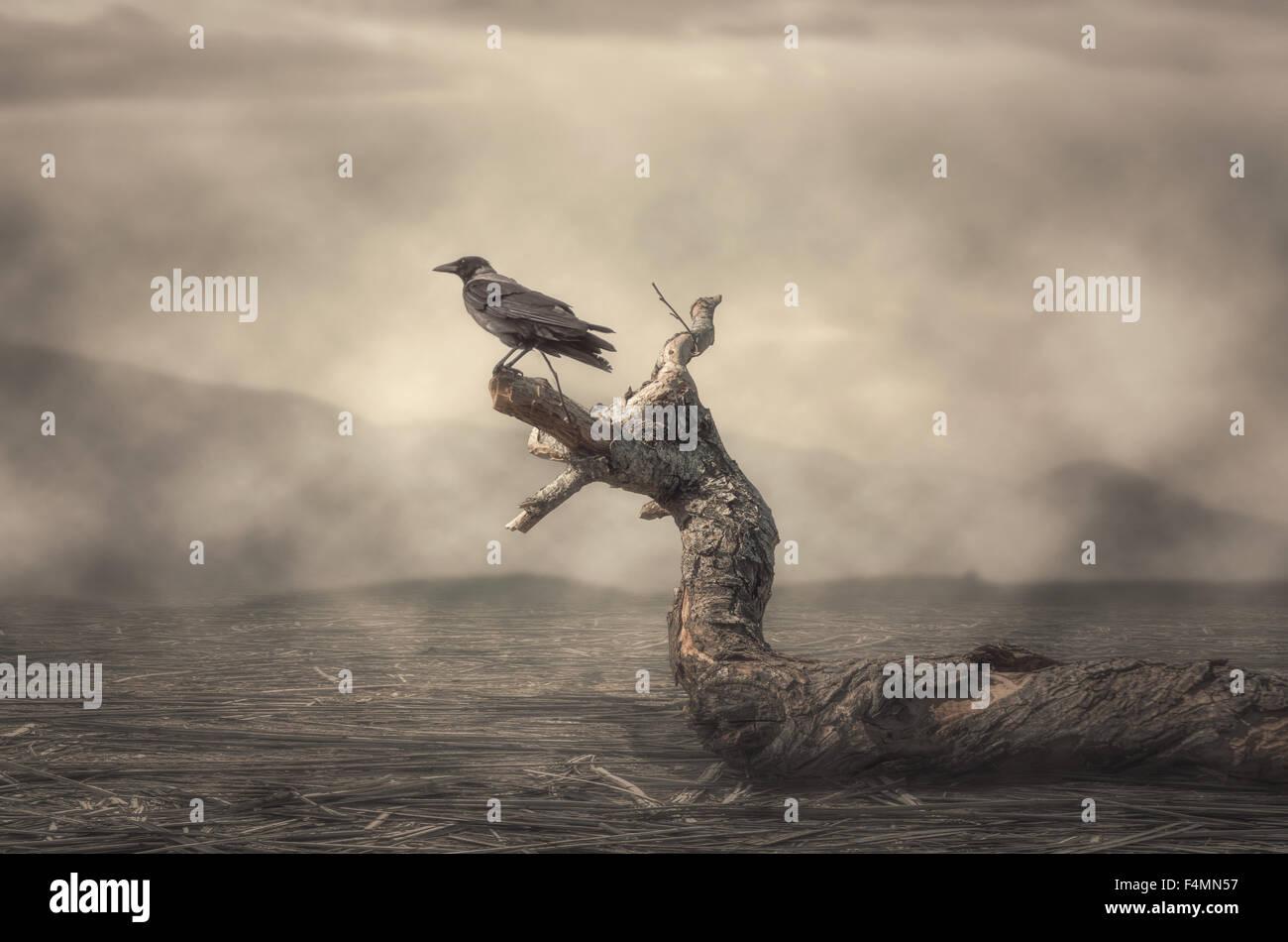Il corvo si appollaia su albero in misty meteo Immagini Stock