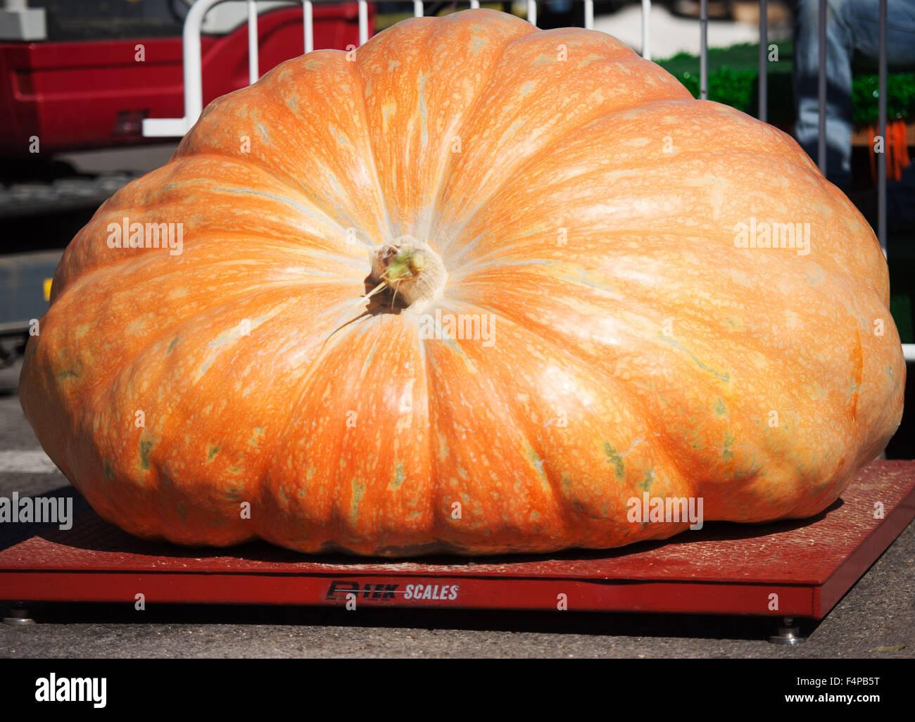 Circleville, Ohio, Stati Uniti d'America. Xxi oct, 2015. Rusty Ortman ha vinto 1,666 lb. La zucca nella 109 Immagini Stock