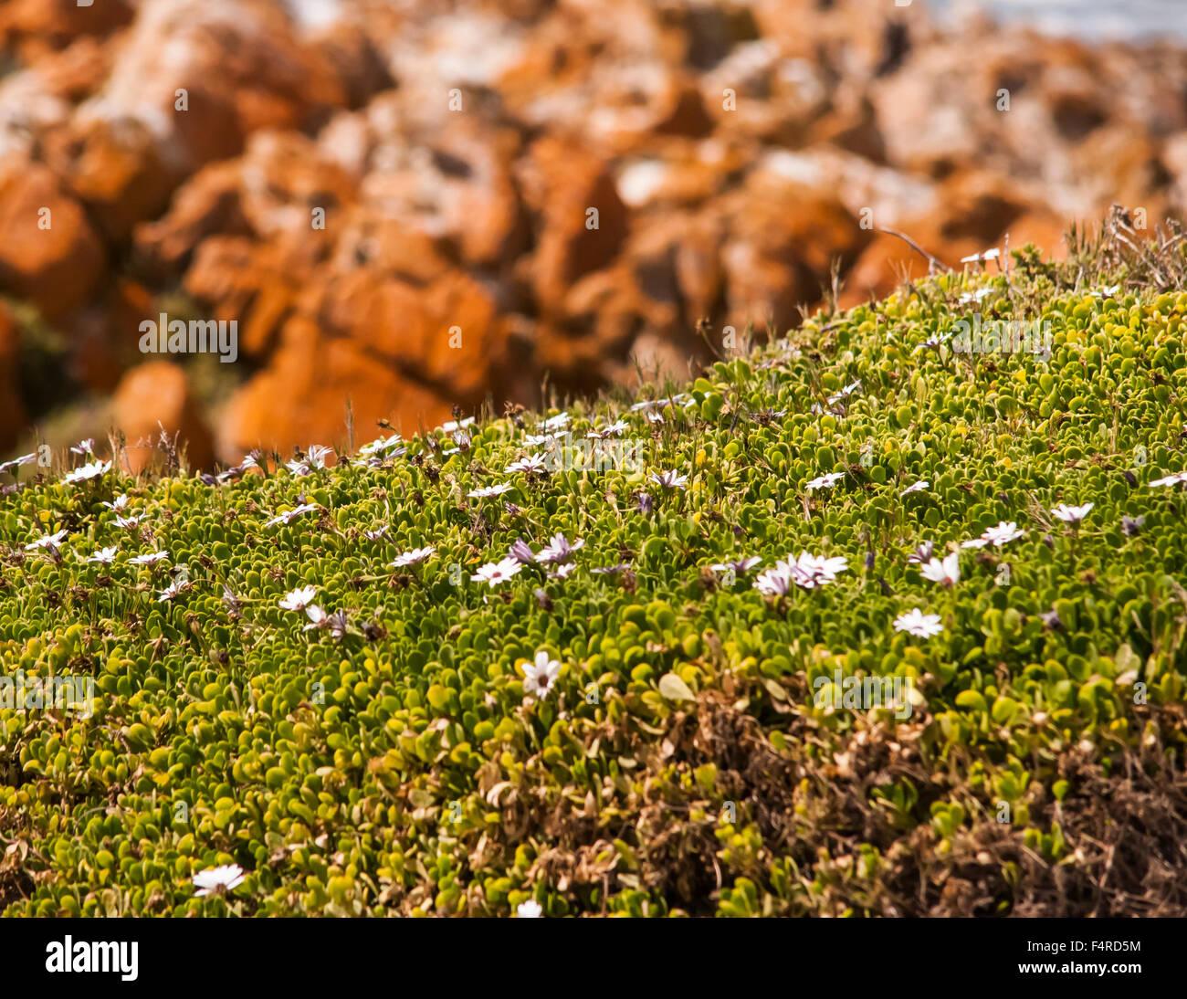 La bellezza della flora di dune Immagini Stock