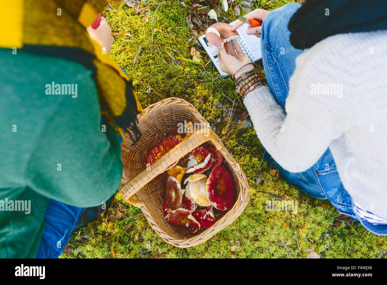 Finlandia, Etela-Savo, Huttula, due giovani donne accovacciato da basketful dei funghi Russula Immagini Stock