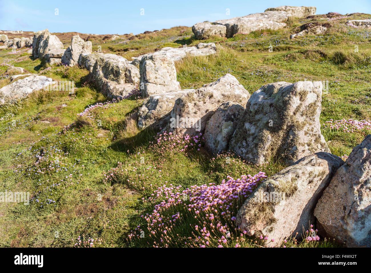 Scherma di roccia in un paesaggio costiero a Lands End, Cornwall, Inghilterra, Regno Unito | Fels Einzaeunung in Immagini Stock
