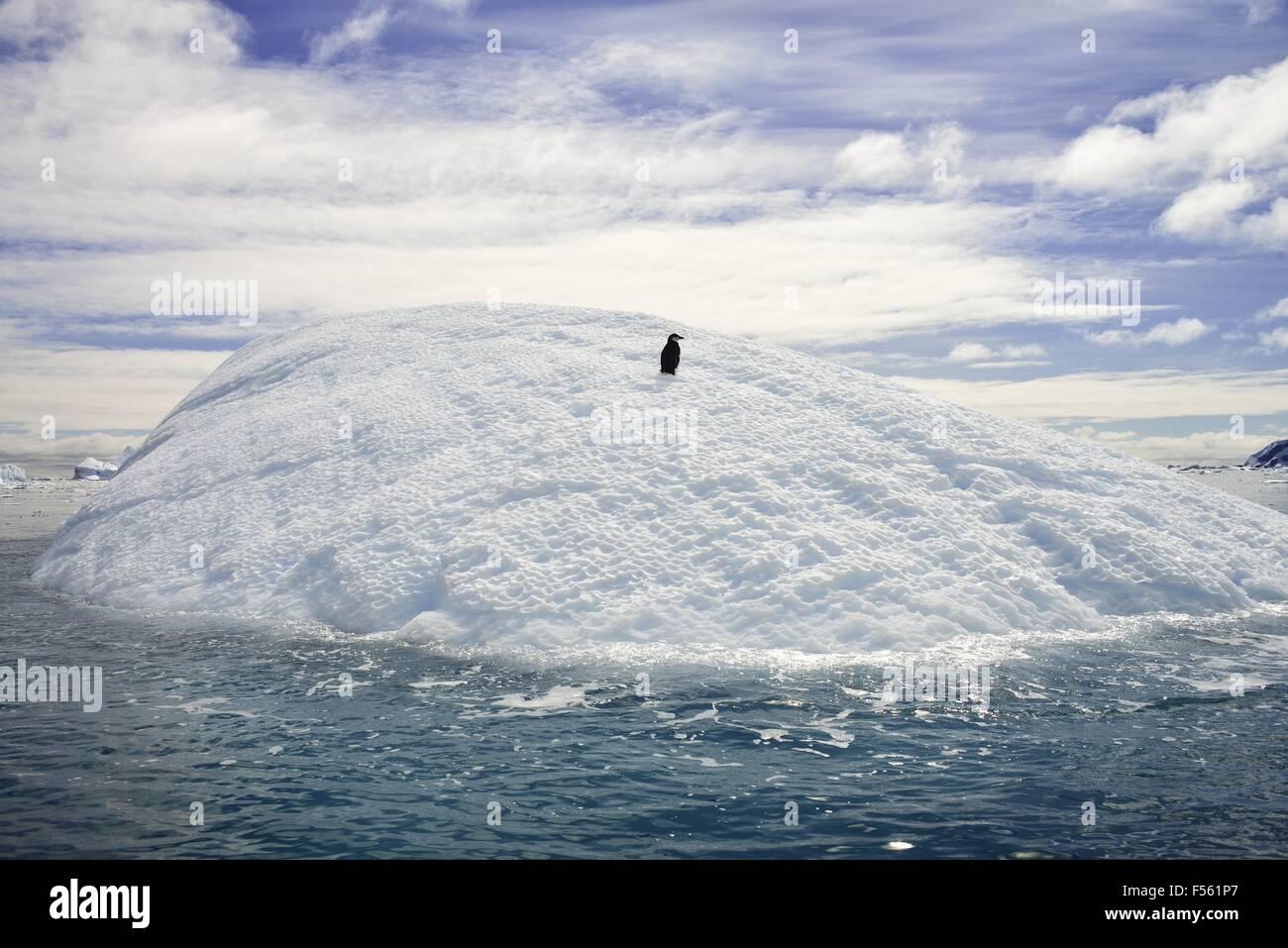 Un unico pinguino in appoggio su un iceberg! Immagini Stock