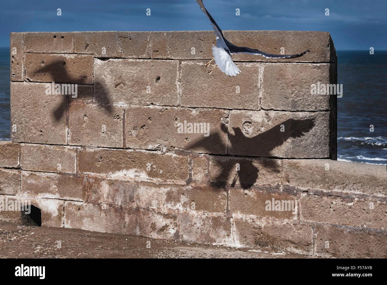 Flying seagull ombre contro il muro di pietra. Immagini Stock