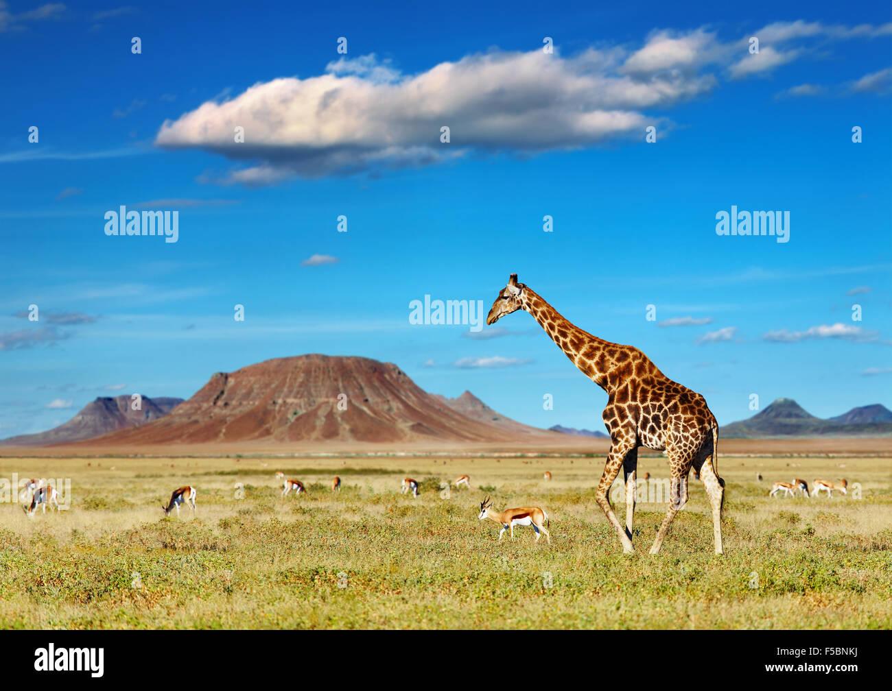 Savana Africana con la giraffa e il pascolo di antilopi Immagini Stock