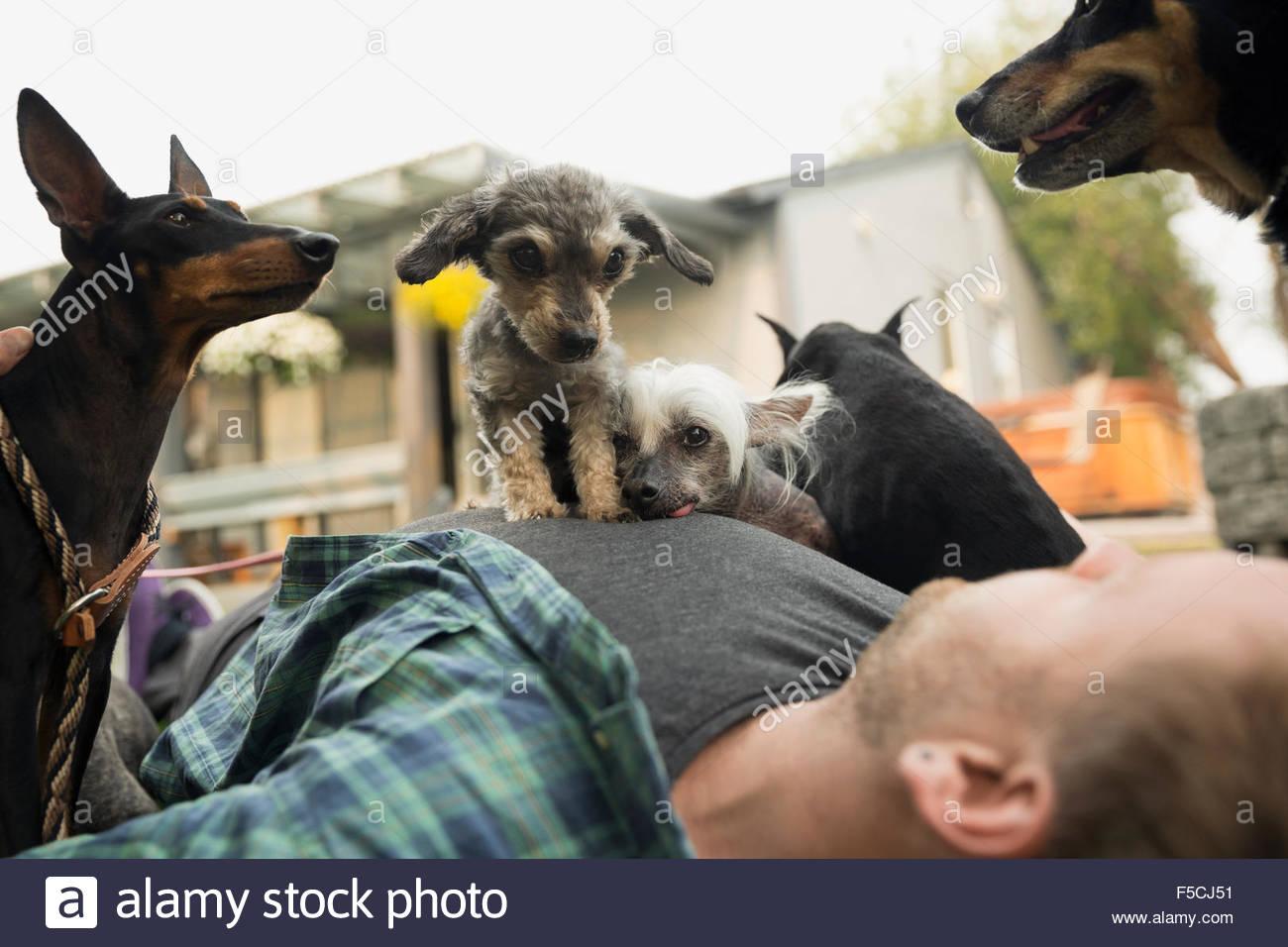 Cani recante sulla parte superiore dell'uomo Immagini Stock