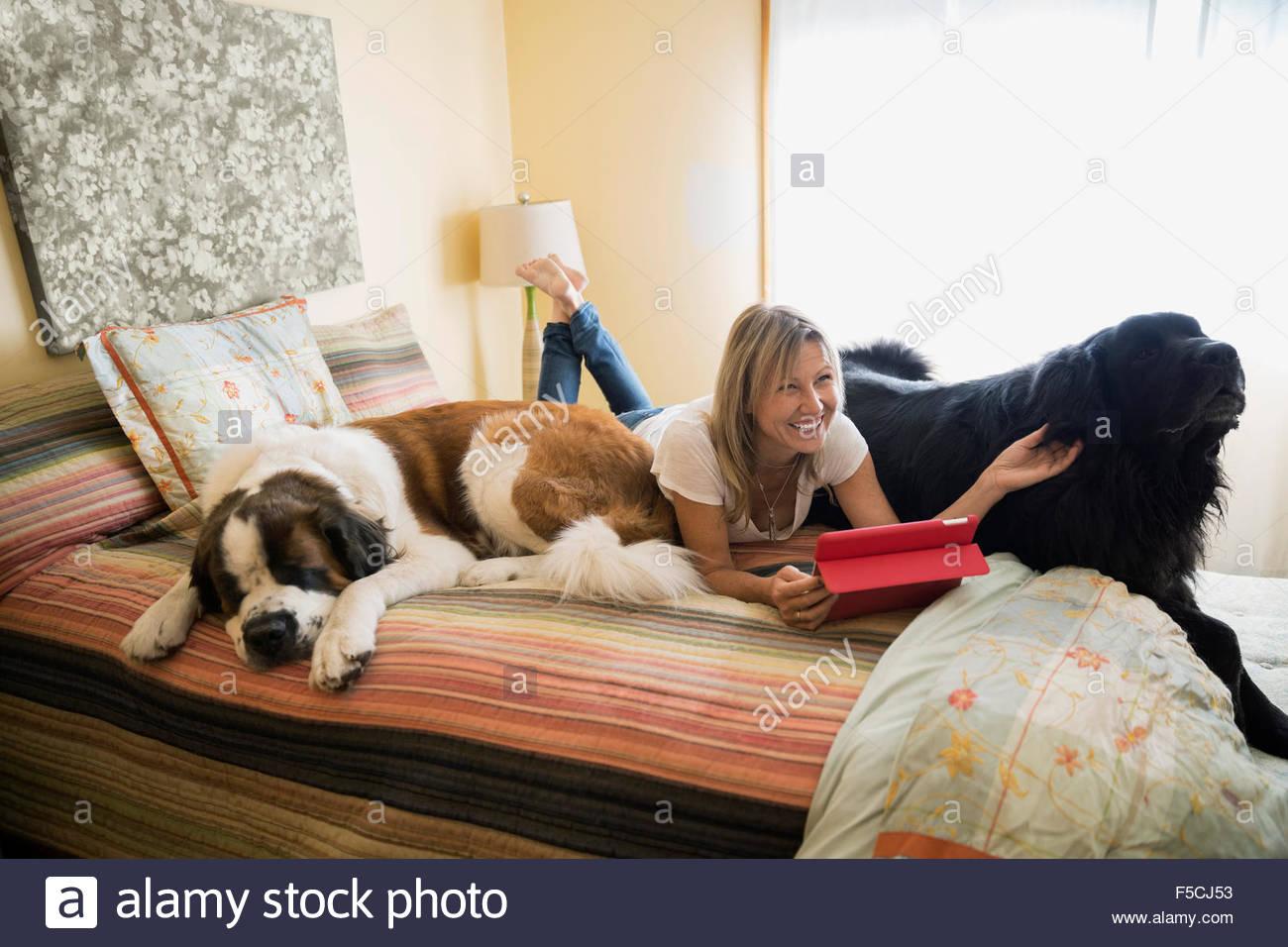 Donna con i cani di grande taglia e tavoletta digitale bed Immagini Stock