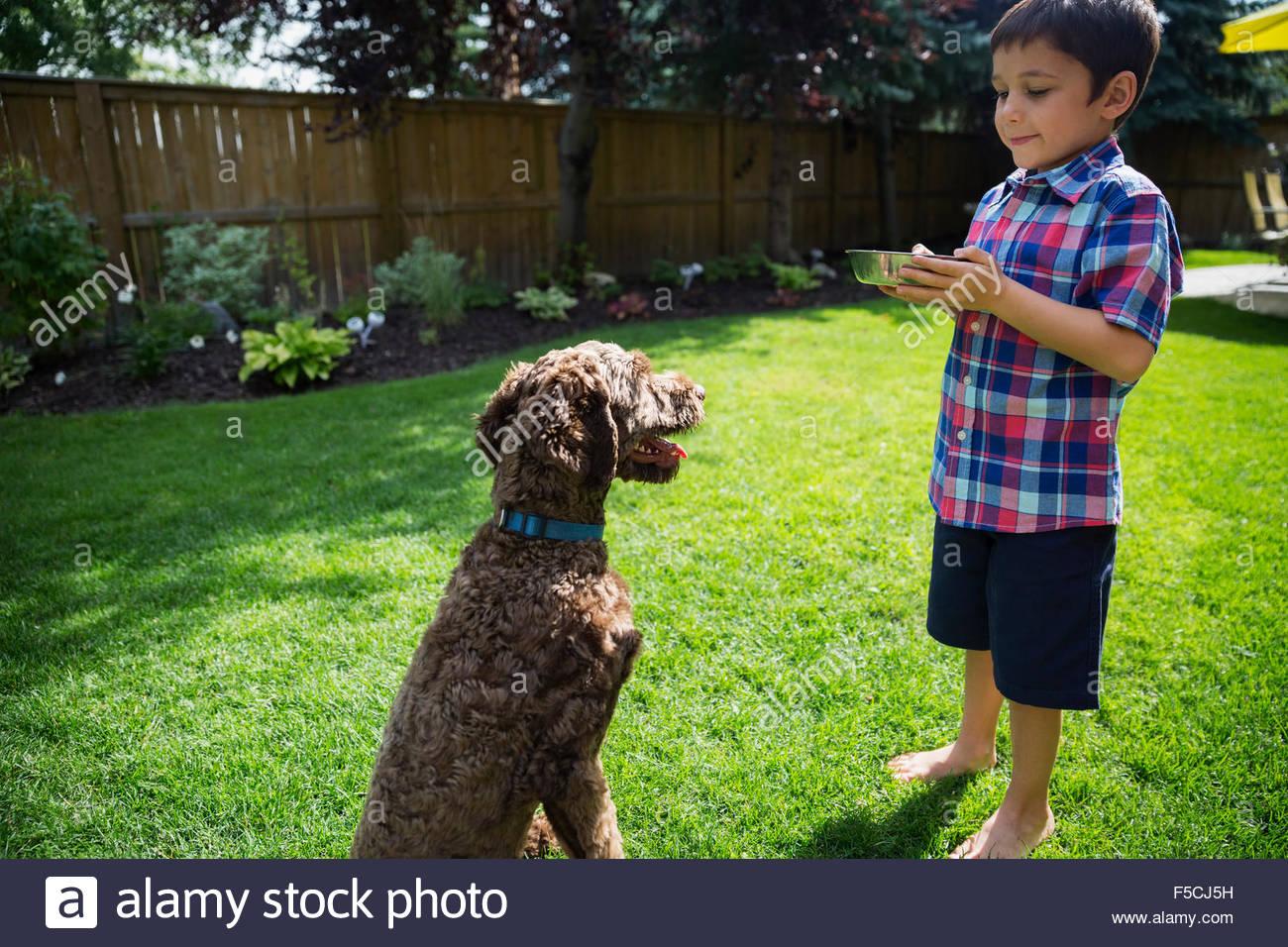 Ragazzo del cane di alimentazione sul prato soleggiato Immagini Stock