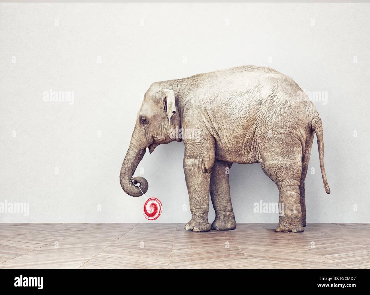 Un elefante calma in camera vicino a muro bianco. Concetto creativo Immagini Stock