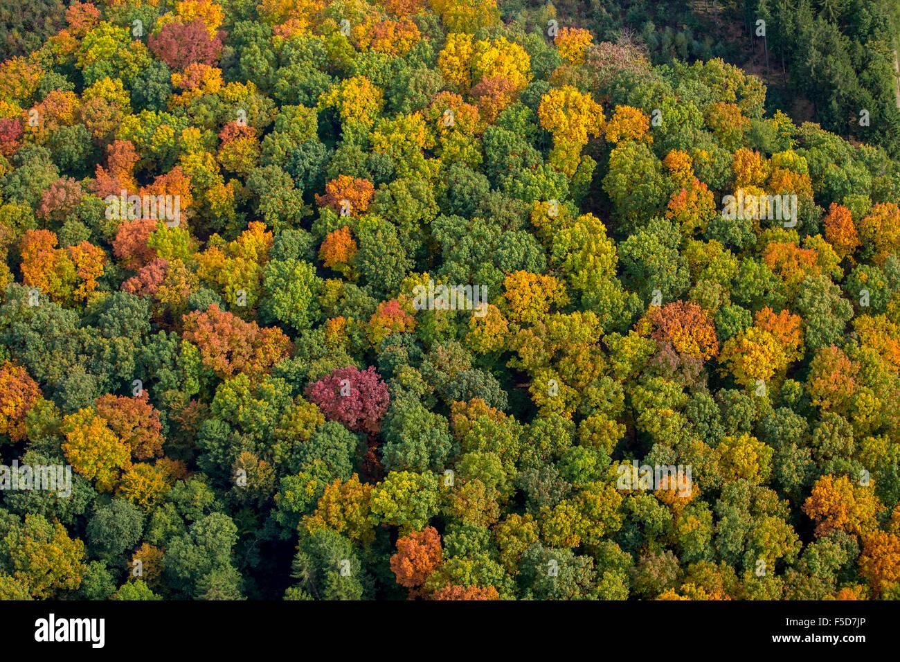 Il fogliame di autunno, colori luminosi in autunno la foresta, la Foresta di Arnsberg, Meschede, Sauerland, Nord Immagini Stock