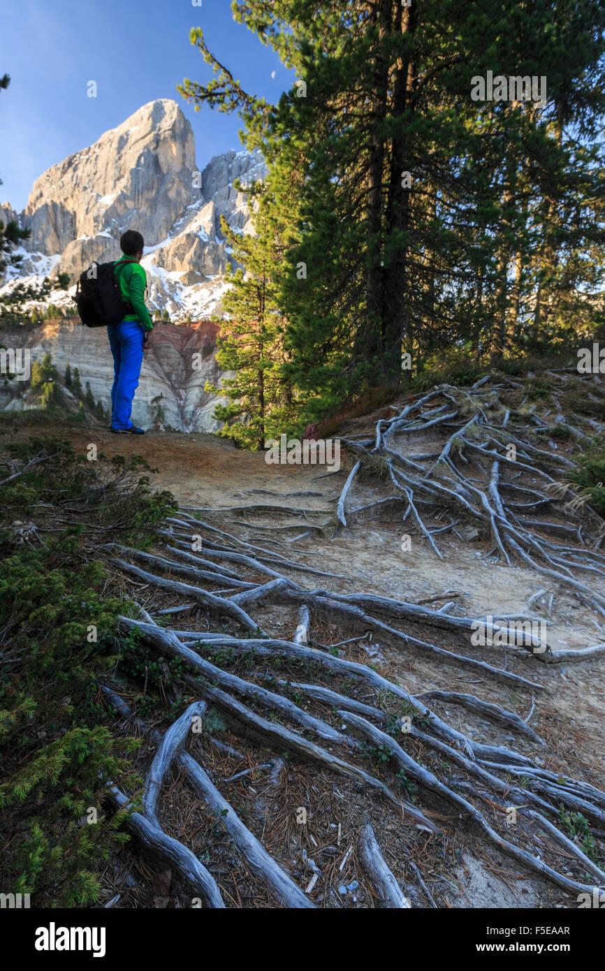 Escursionista nei boschi si ammira il Sass de Putia, il Passo delle Erbe, Puez Odle, Alto Adige, Dolomiti, Italia, Immagini Stock