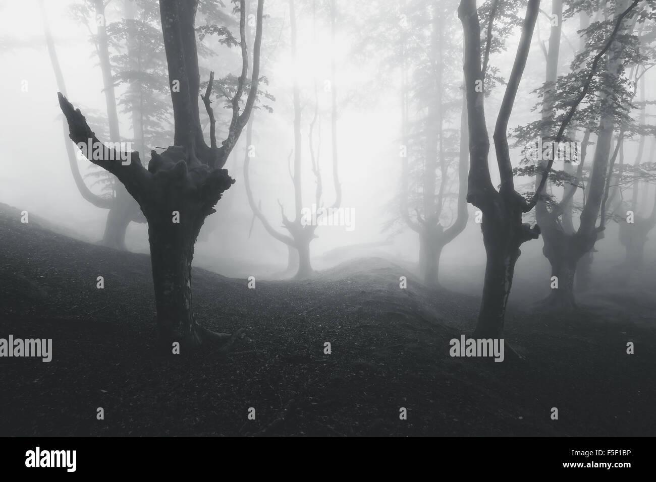 Creepy misteriosa foresta in bianco e nero Immagini Stock