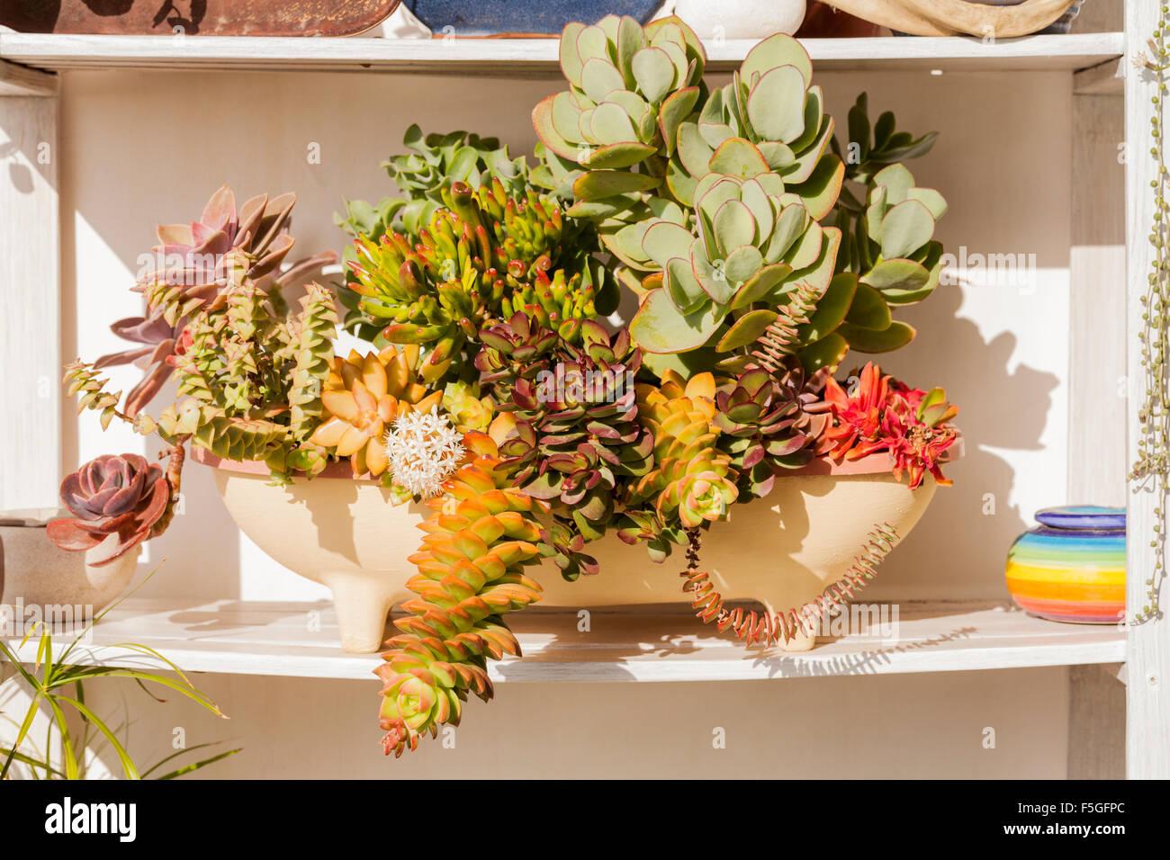 Terrazza giardino con piante grasse cactus e altre sub for Giardino in terrazza