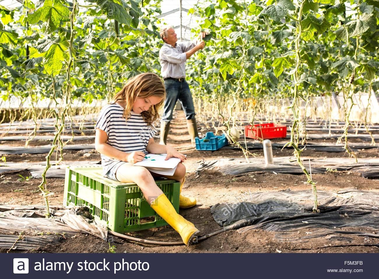 Ragazza seduta sulla cassa in serre riscaldate di disegno mentre nonno lavora dietro Immagini Stock