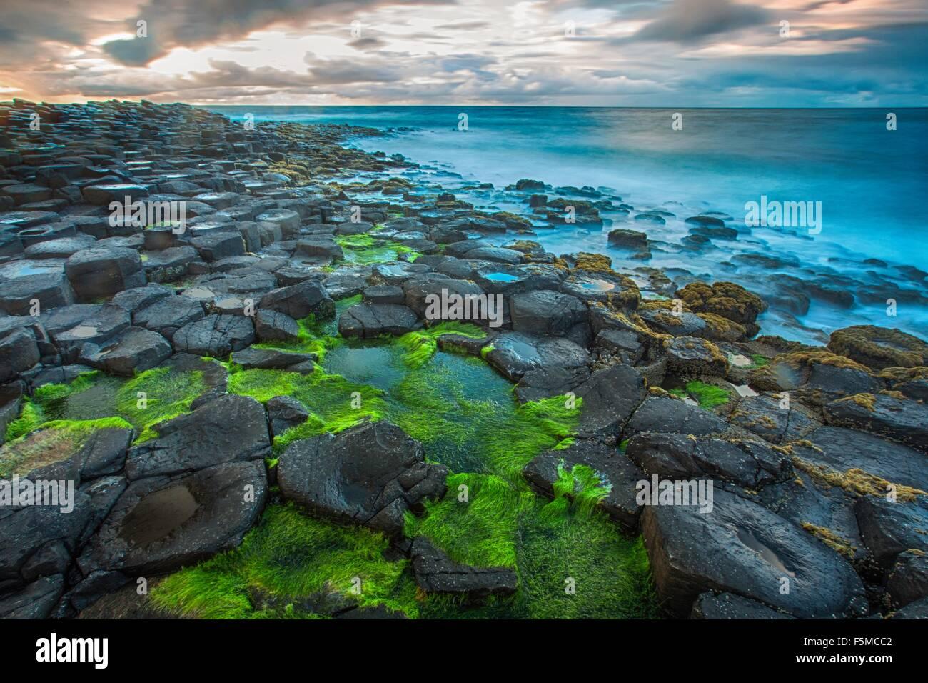 Angolo di alta vista di moss coperto Giants Causeway e blu oceano, Bushmills, County Antrim, Irlanda, Regno Unito Foto Stock