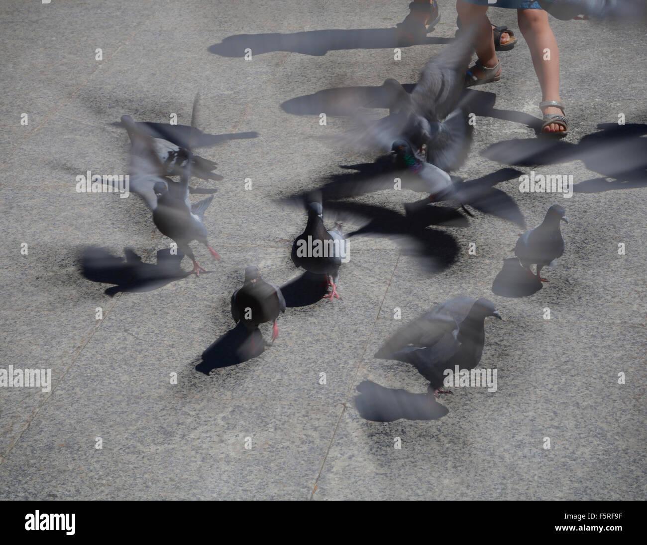 Bambini chase piccioni e di volare fino in tutte le direzioni, ali che sbattono come queste disperdono Immagini Stock
