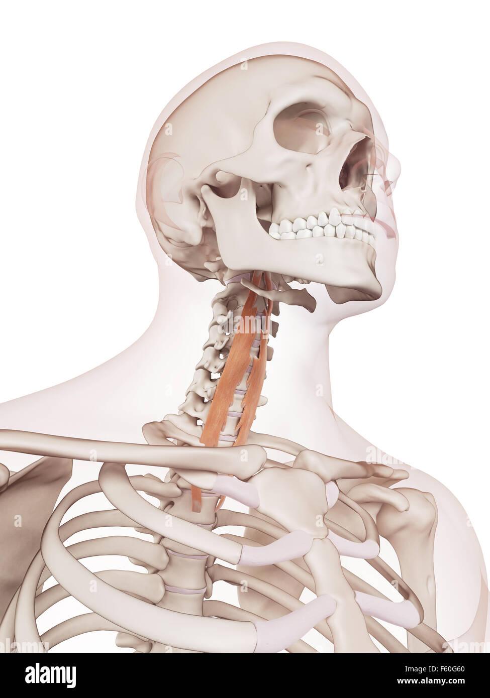 Fantastisch Querfort Ideen - Anatomie Von Menschlichen Körperbildern ...