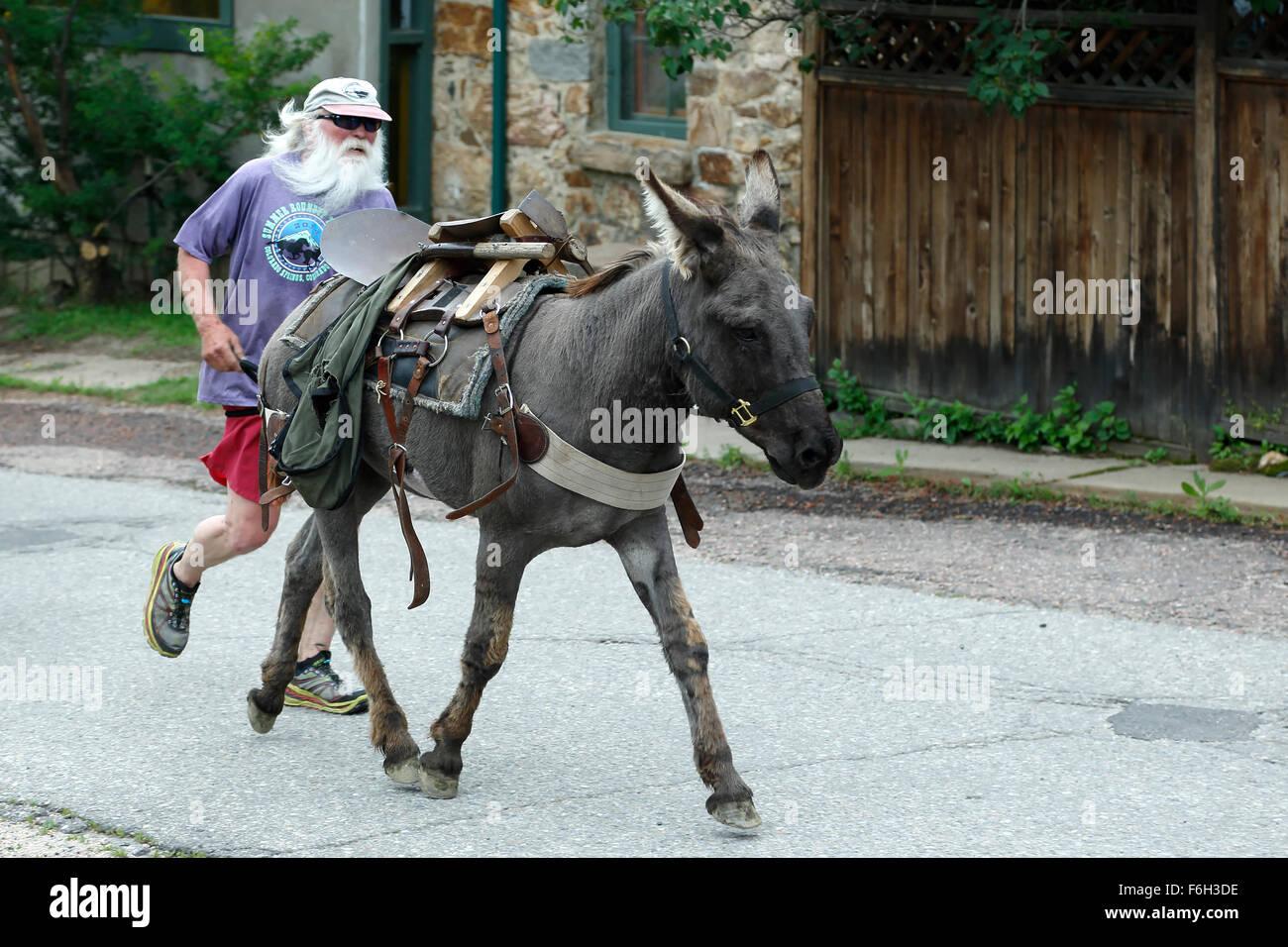 Runner e pack burros, Idaho Springs Tommyknockers Mining Days Festival e pacco gara di burro, Idaho Springs, Colorado, Immagini Stock
