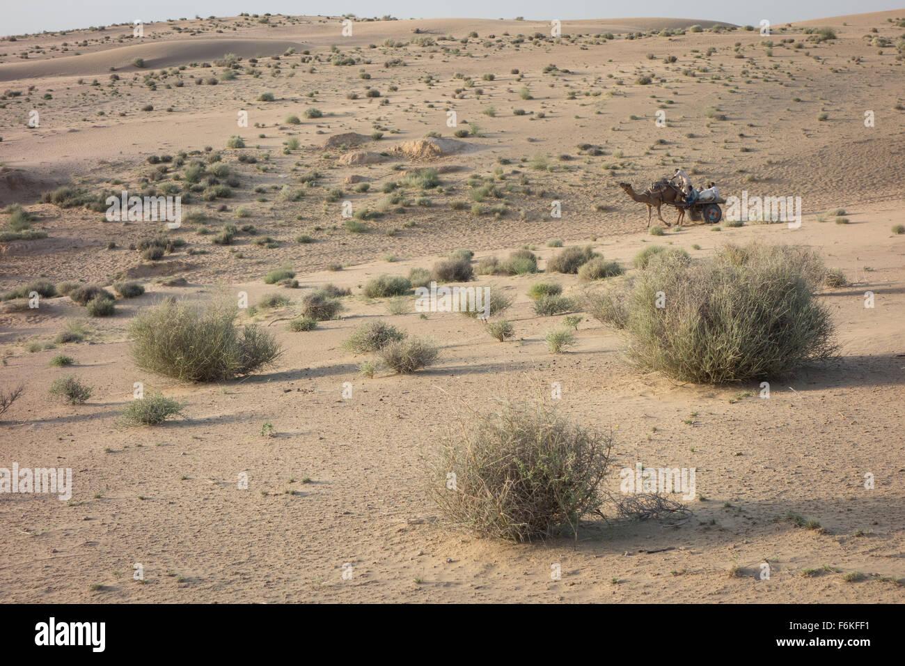 Un lavoro di matasse di cammello un carrello portare uomini e bestiame. Deserto di Thar, Rajasthan, India. Immagini Stock