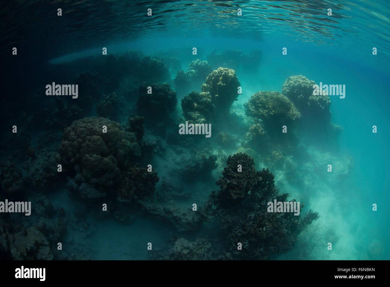 Un lago marino in Palau ha quasi un sogno-come aspetto dovuto al colore dell'acqua e strana crescita di coralli. Immagini Stock