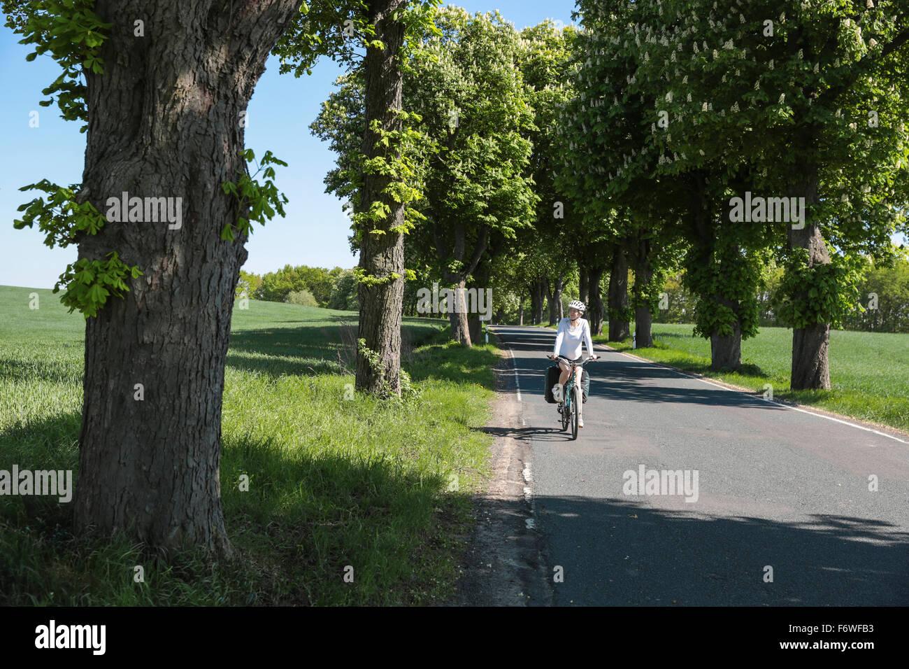 Ciclista passando un castagno-rigato Avenue, vicino Boitzenburg, Uckermark, Brandeburgo, Germania Foto Stock