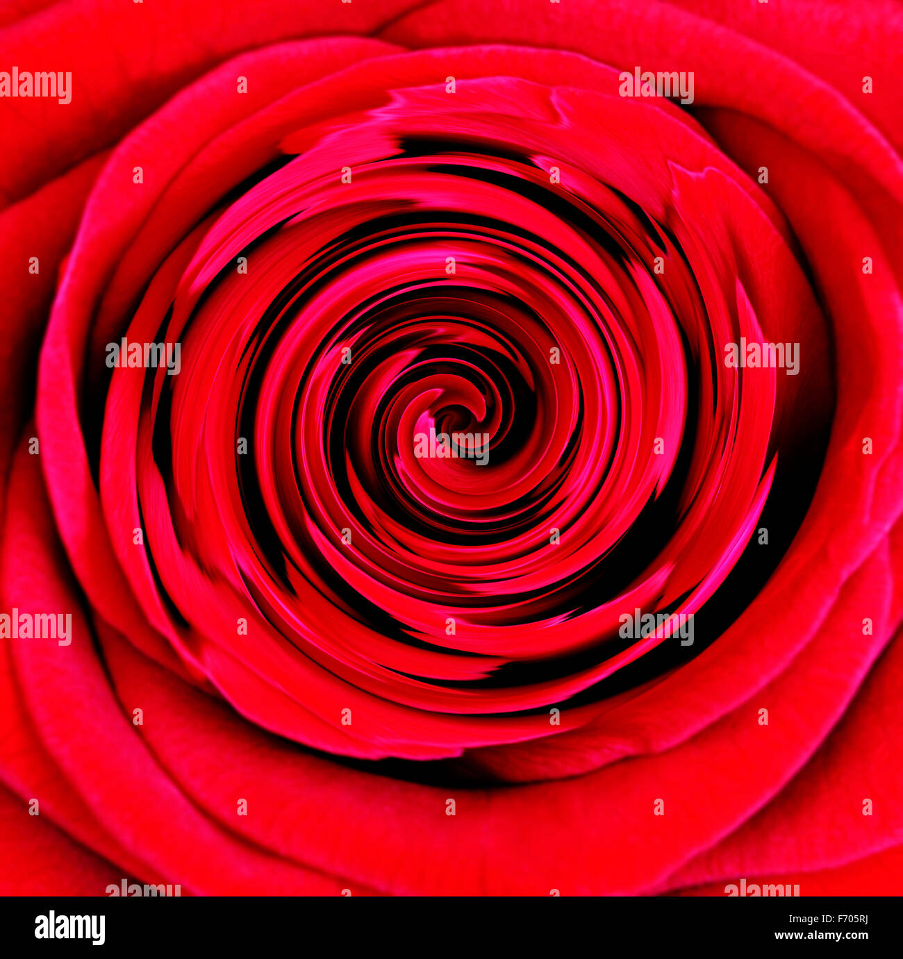 Red Rose swirl - Abstract Immagini Stock