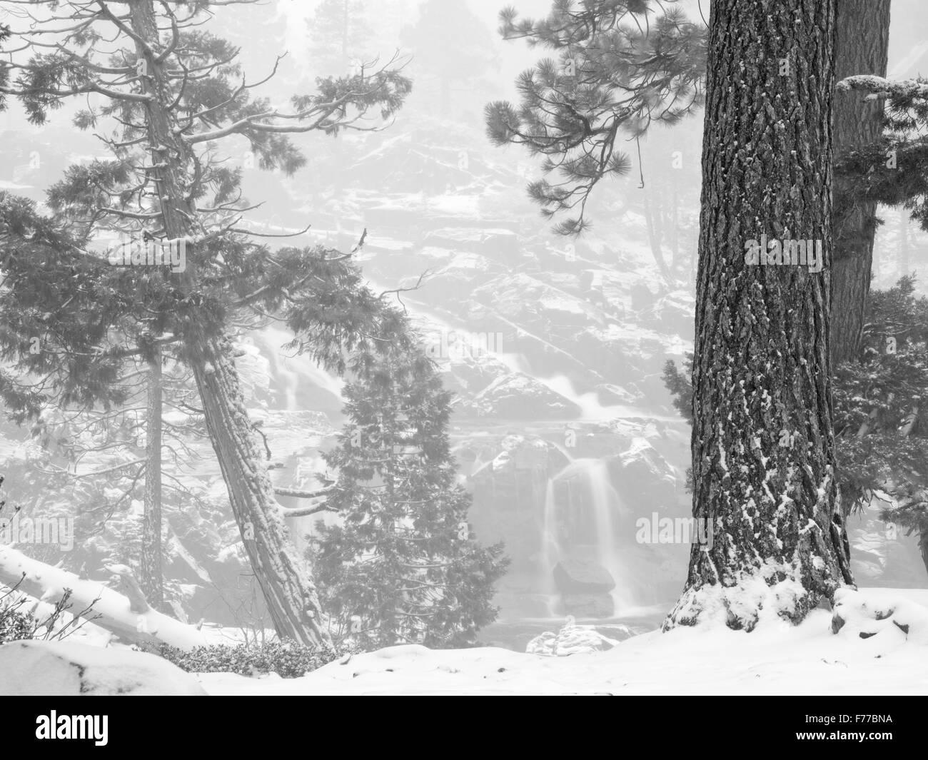 Glen Alpine cade pochi minuti dopo la caduta di neve fresca. Lake Tahoe, California Immagini Stock