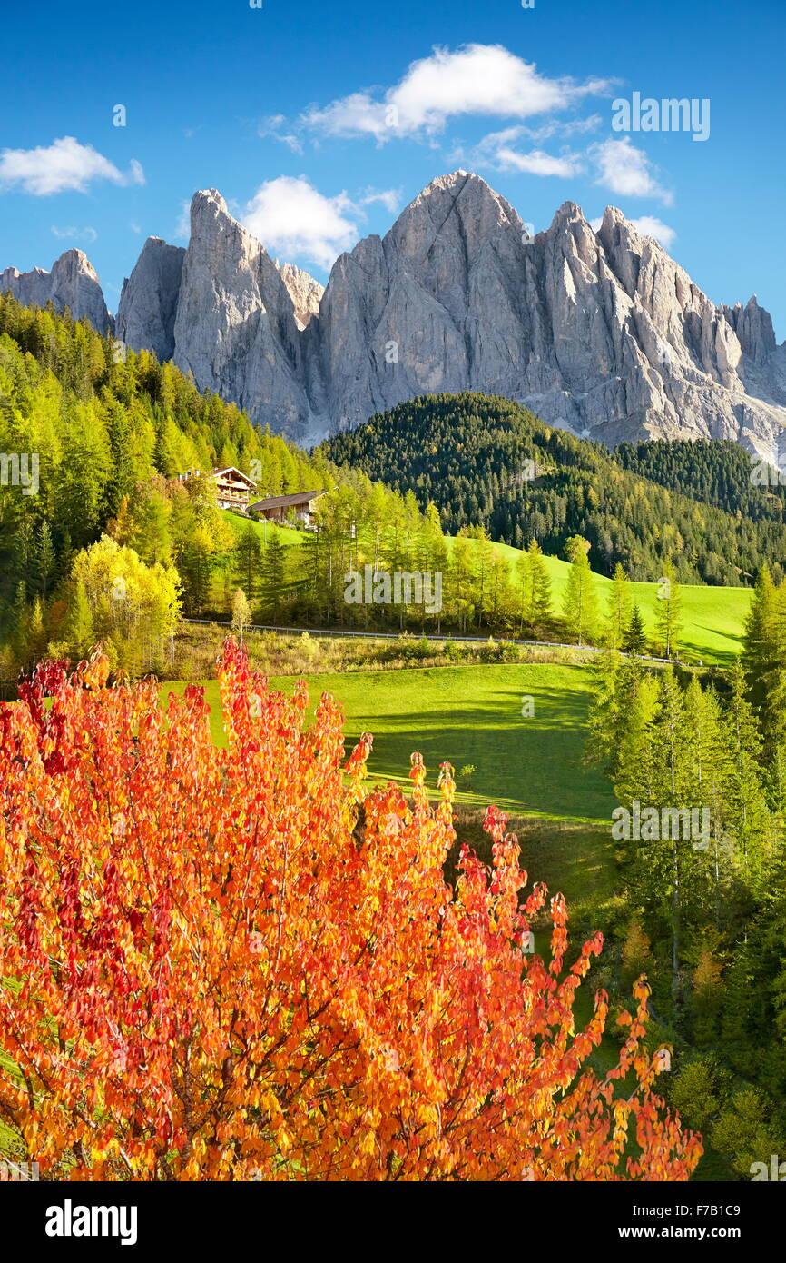 Dolomiti, paesaggio autunnale, Val di Funes, Alpi, Alto Adige, Italia Immagini Stock