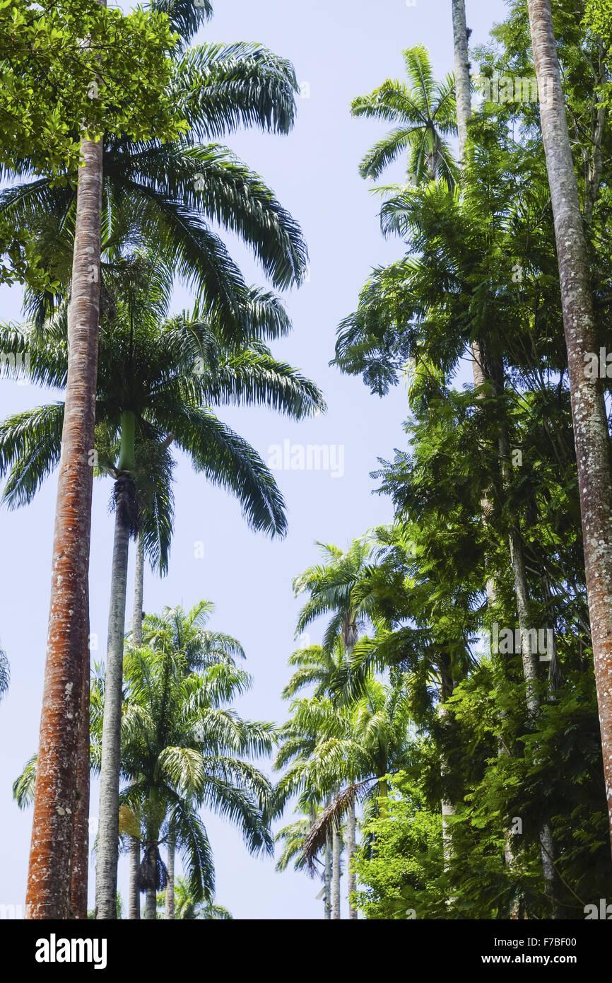 Rio de Janeiro, giardino botanico, Jardim Botanico, Brasile Immagini Stock