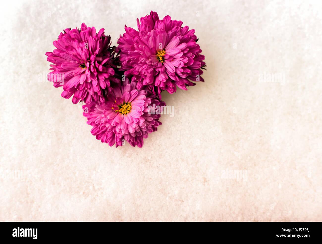 Tre Crisantemo Rosa Fiori Senza Peduncolo Giaceva Su Un Bianco Della
