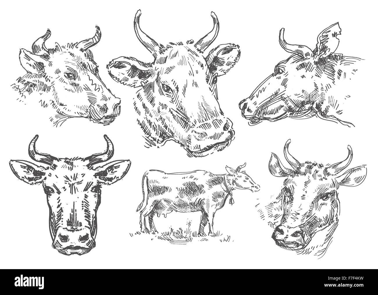 Disegnate a mano vacca. schizzo Immagini Stock