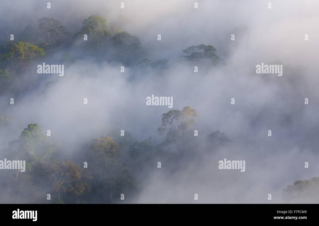La foresta pluviale e la nebbia, Danum Valley, Sabah, Malaysia Foto Stock