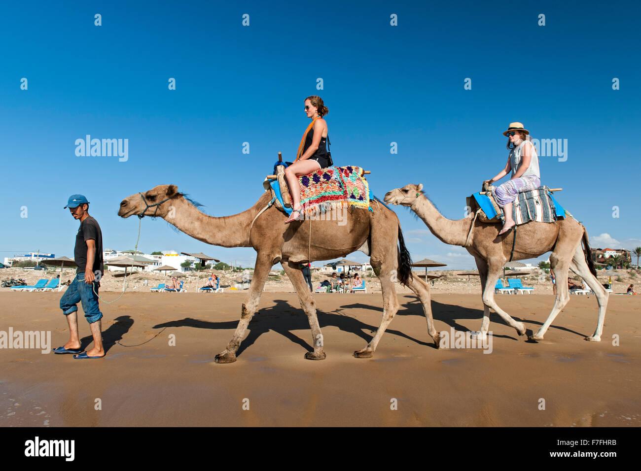 I turisti a cavallo di cammelli lungo il bordo dell'acqua di Sidi Kaouki beach in Marocco. Immagini Stock