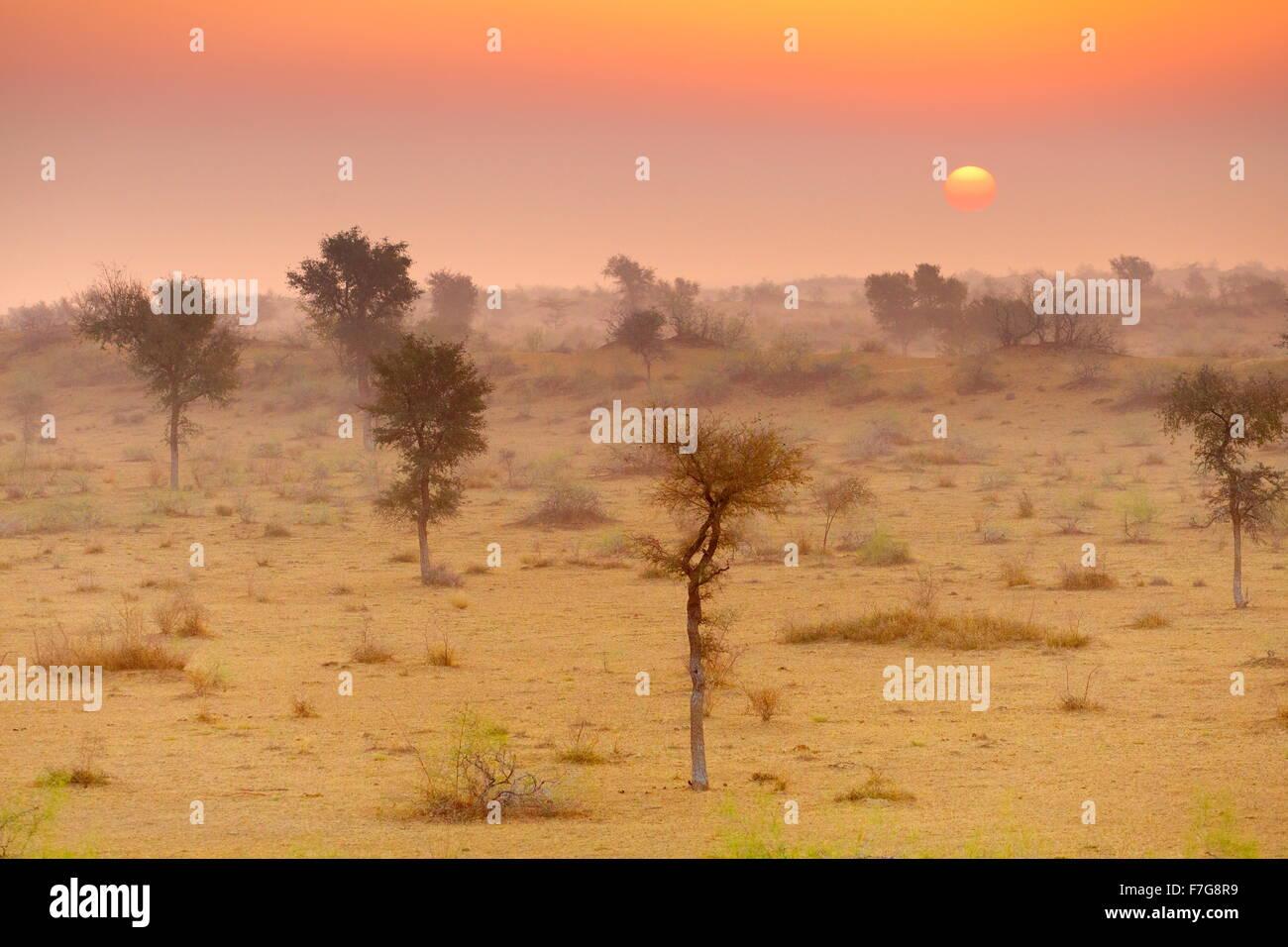 Sunrise nel deserto di Thar vicino a Jaisalmer, Rajasthan, India Immagini Stock