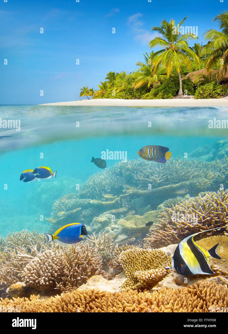 Spiaggia tropicale a Isole Maldive Immagini Stock